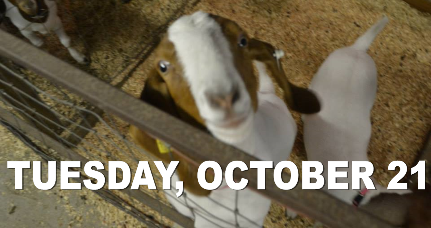 You are currently viewing TUESDAY, OCTOBER 21